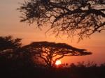 couché de soleil au Serengueti