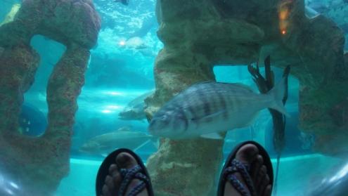 Selfie des pieds ;)