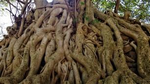 Ces racines!! >wouahhh