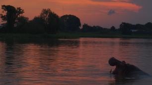 Coucher de soleil en compagnie d'hippopotame