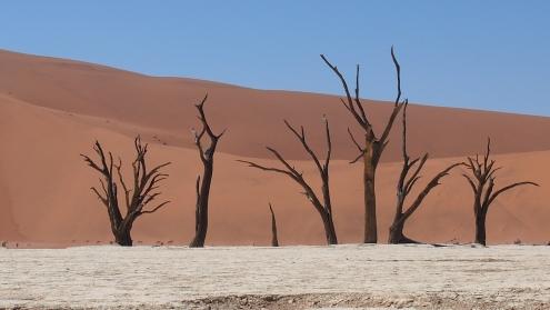 Entourés de dunes