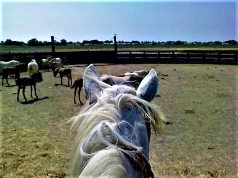 A cheval!!