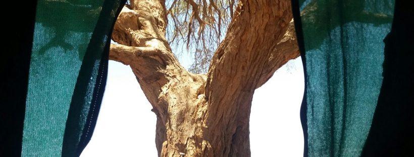 etosha au cœur de la vie sauvage carnets de voyage namibie afrique rencontres et voyagite le blog d une fille qui voyage surtout pour la rencontre de l autre