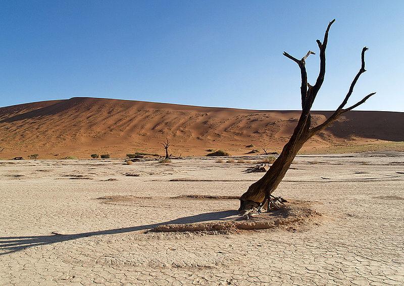 Namibie à la découverte d un milieu sauvage